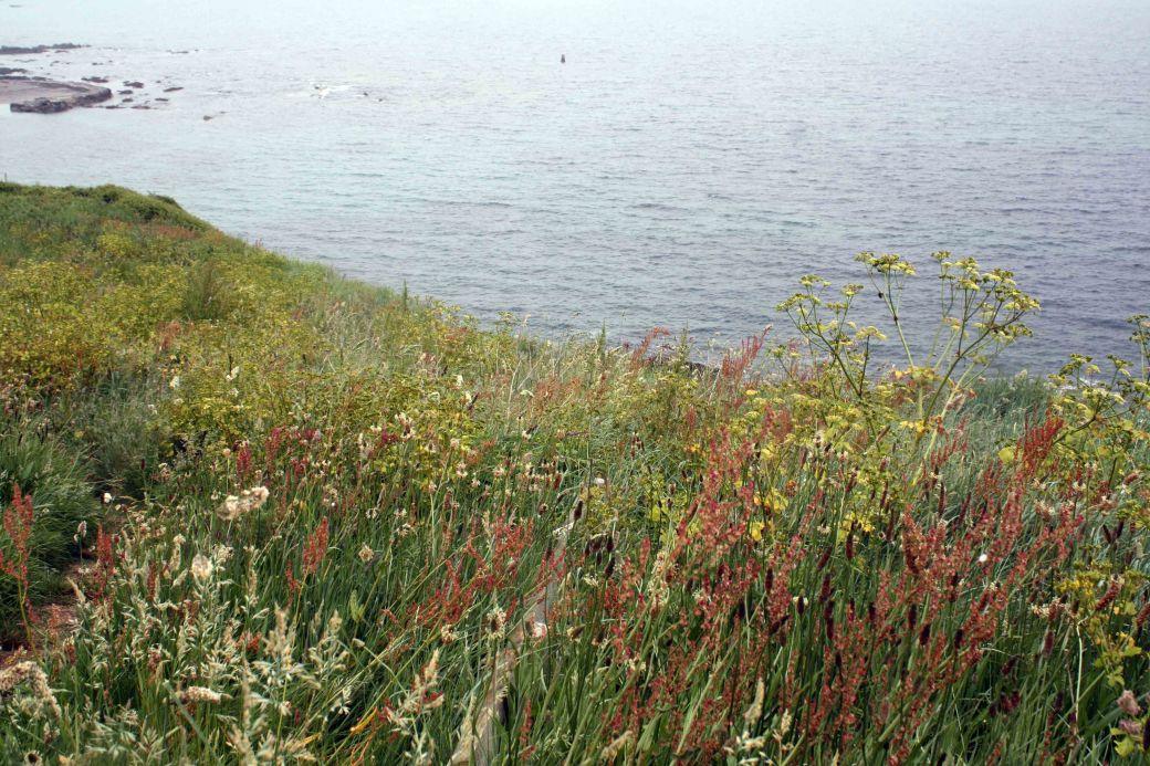 Beautiful grasses sea TP