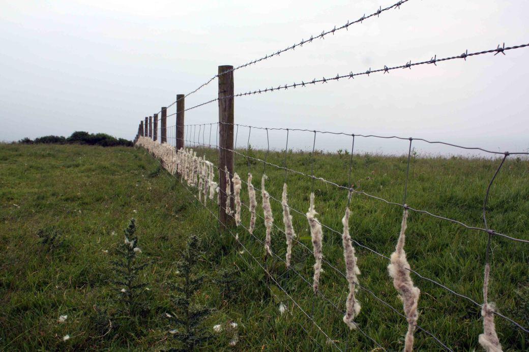 Sheep wool fence
